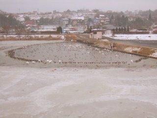 凍結している伊豆沼