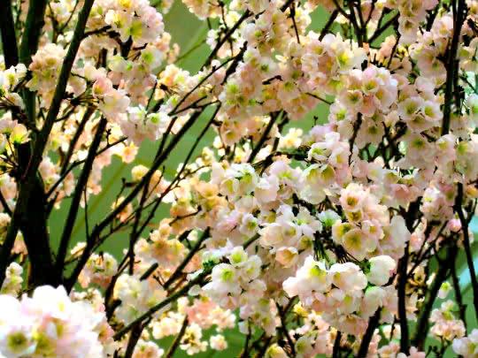 ドコモ桜造花.jpg