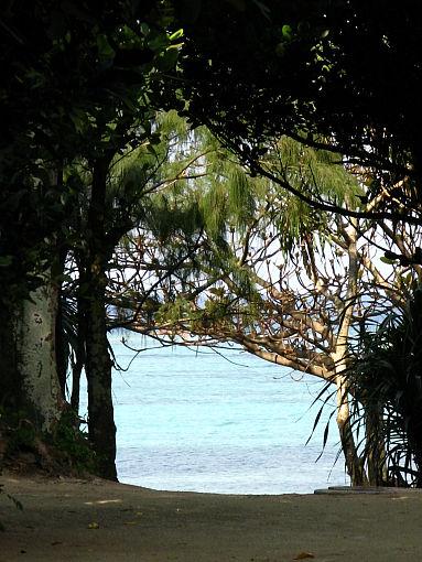 フク木の道3.jpg