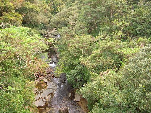 やんばるの川2.jpg