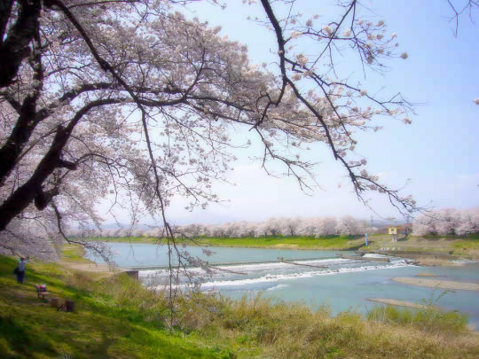 一目千本桜2.jpg