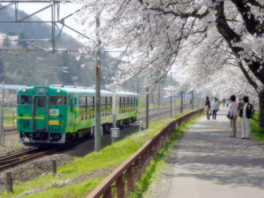 一目千本桜3.jpg