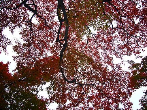 小石川後楽園の紅葉.jpg