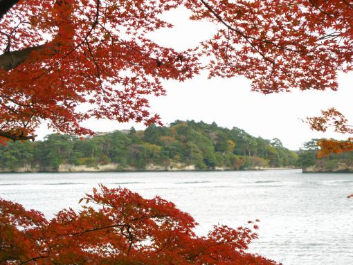 松島の紅葉.jpg