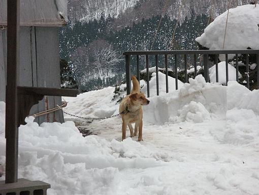山寺犬.jpg