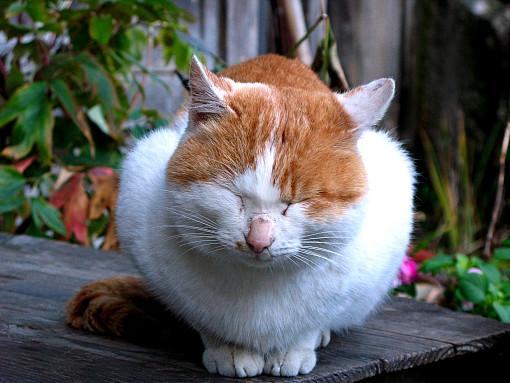 山寺猫.jpg