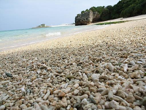 珊瑚の浜.jpg