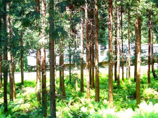 林の中.jpg