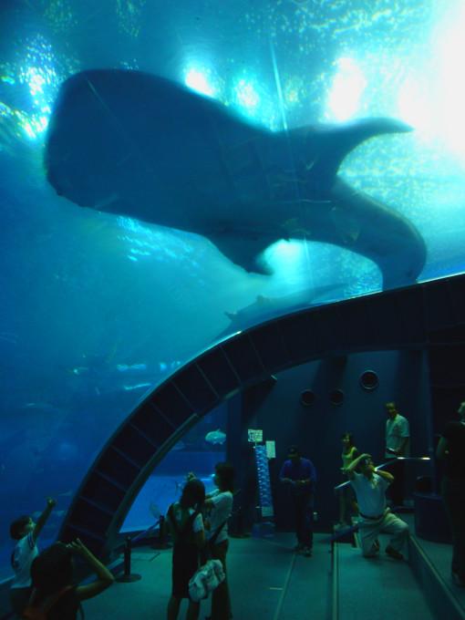 美ら海水族館2.jpg