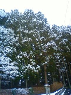 久々に雪。