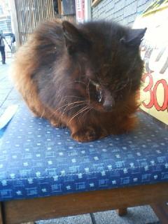 看板野良猫
