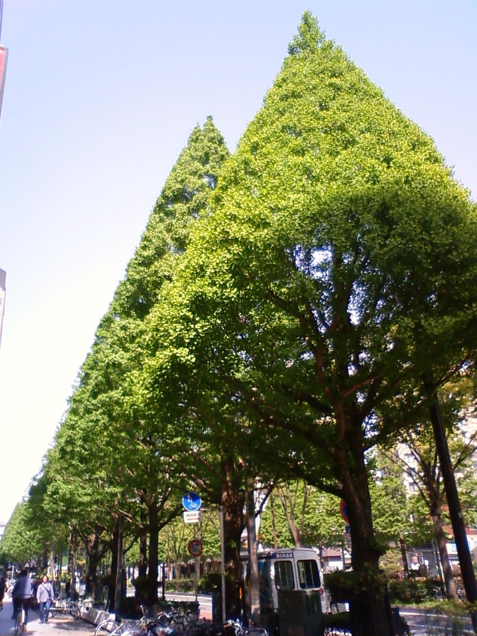 違和感のある街路樹