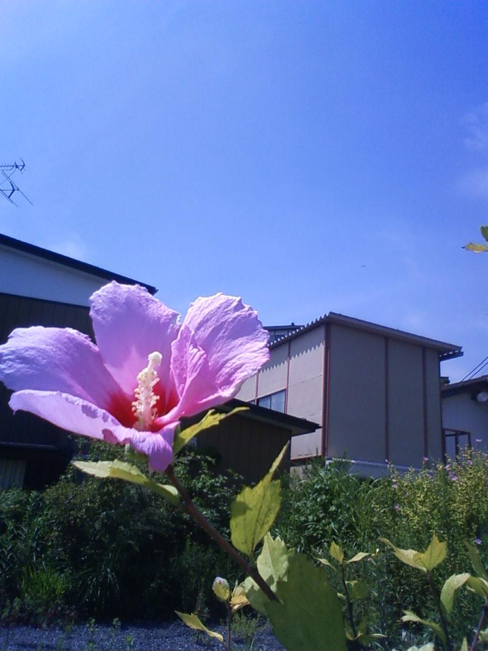 青空に花開く