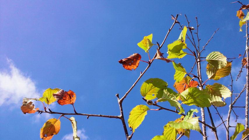 夏と秋の交差点