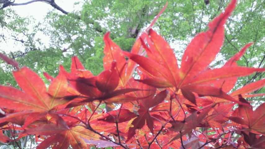 秋と夏の交差点