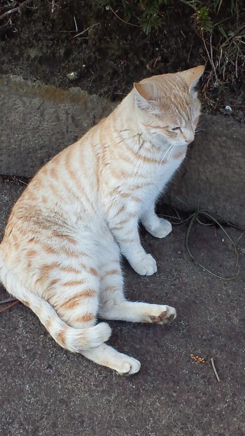 公園の猫。