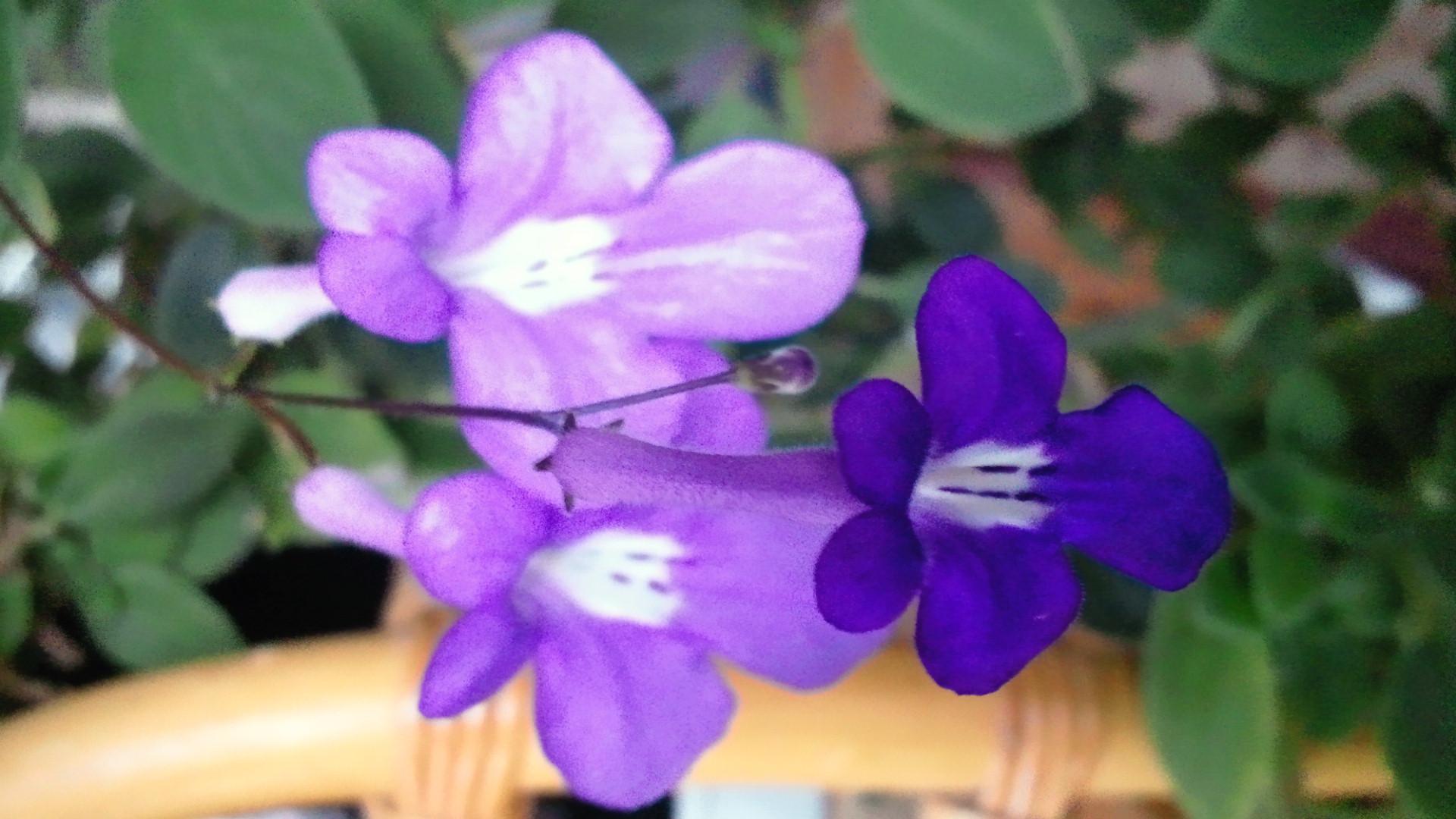 咲くや此花