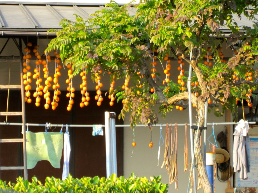 Dried_persimmon