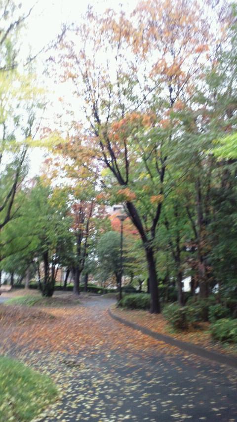 雨上がりの公園。