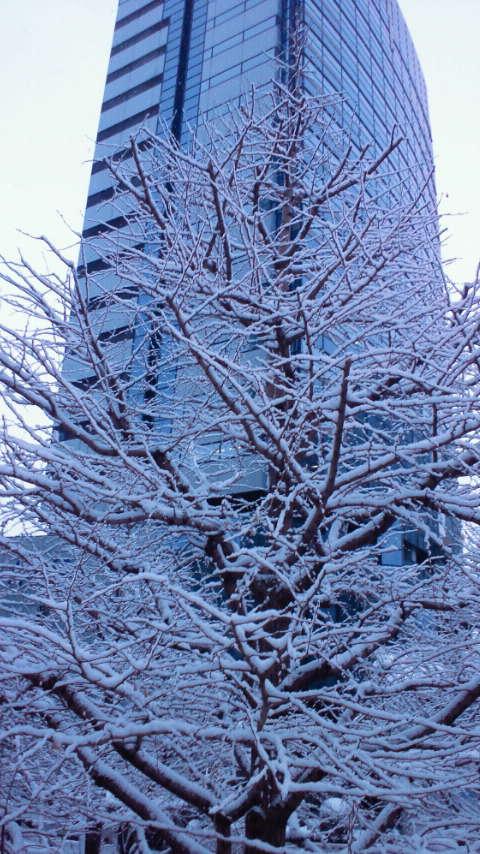 雪やこんこん