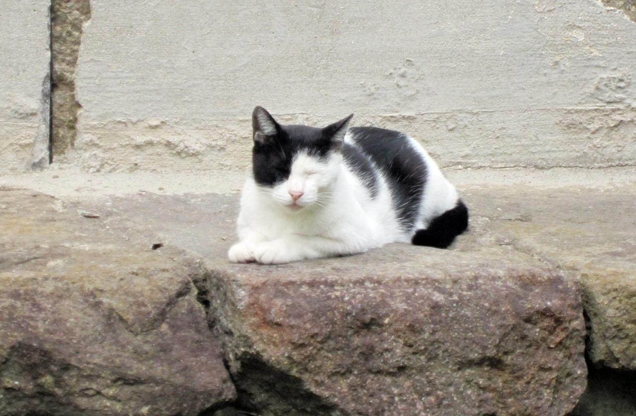 20120920_cat