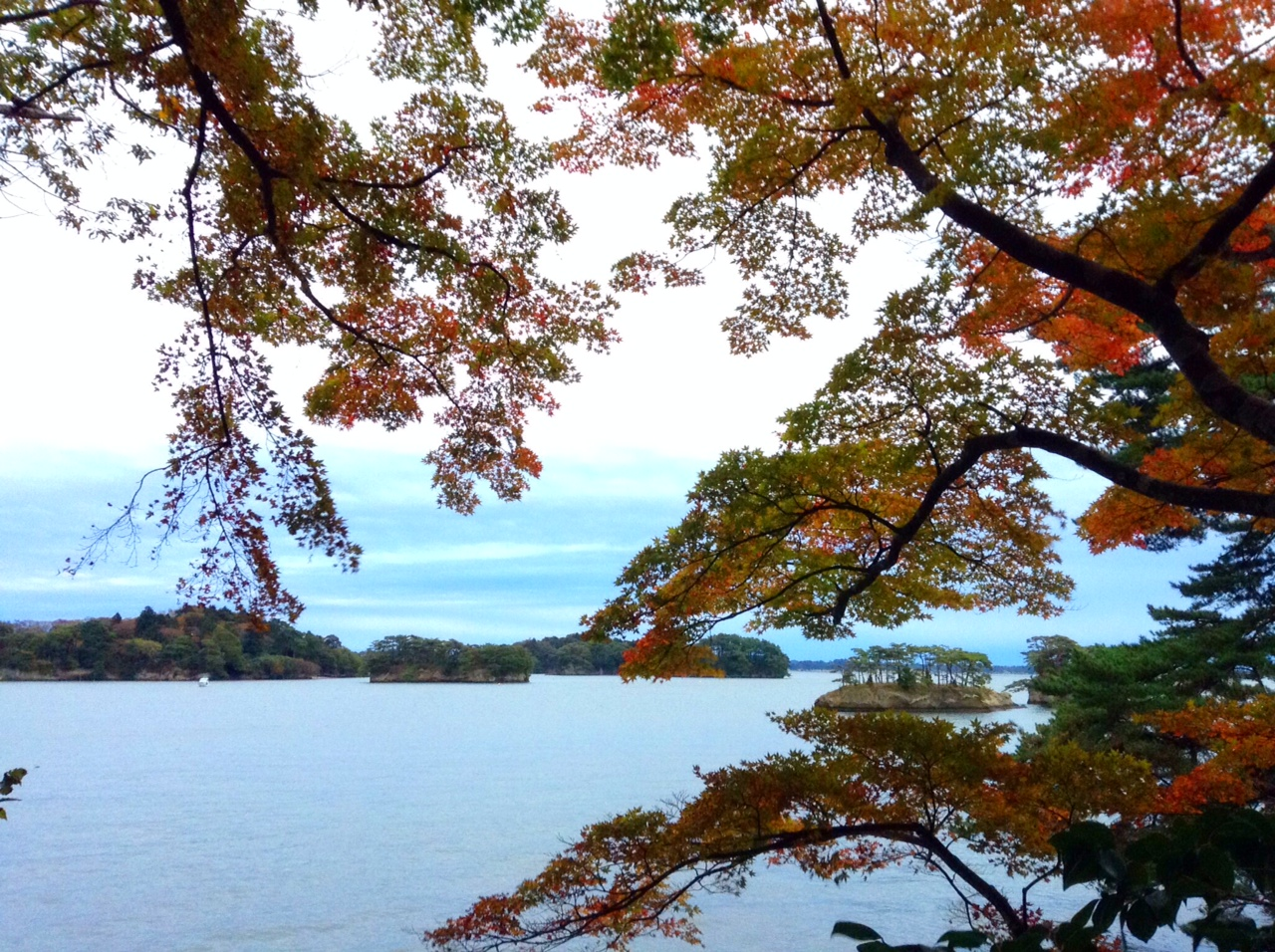 松島のカエデ。