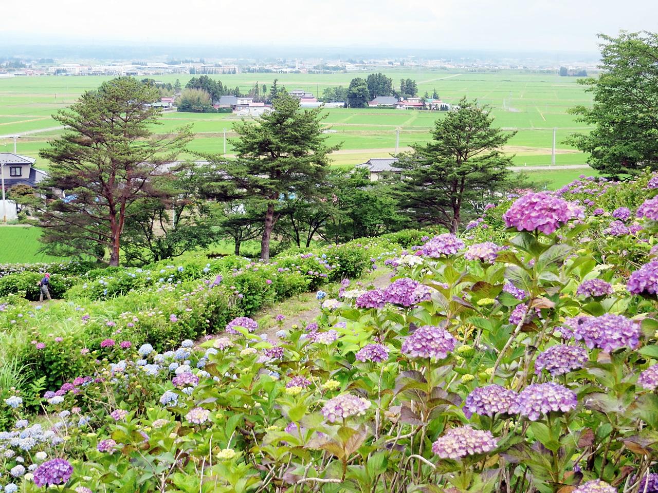Shikama_20140628