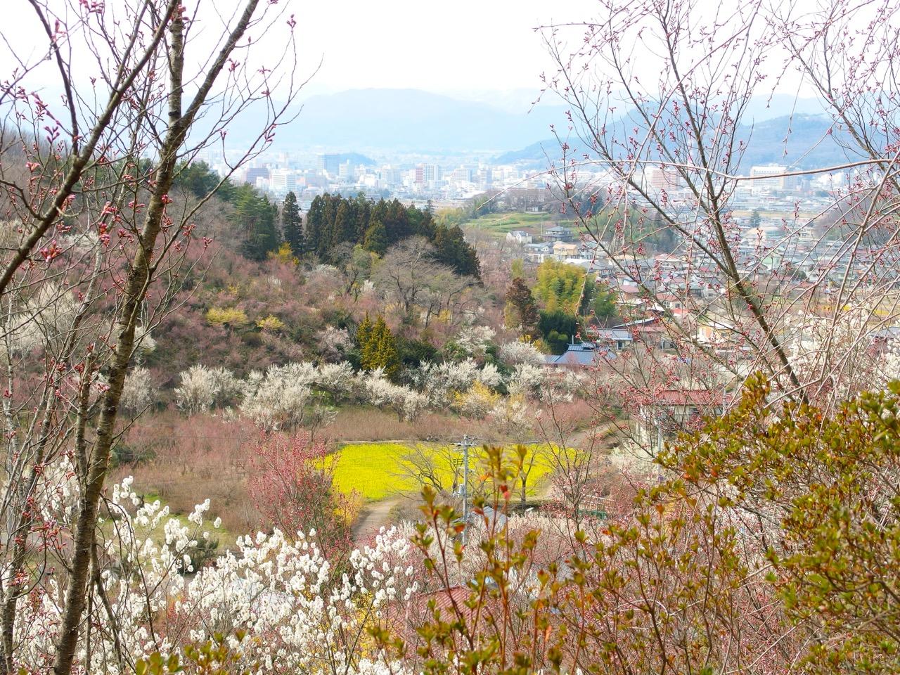 Hanamiyama_20151