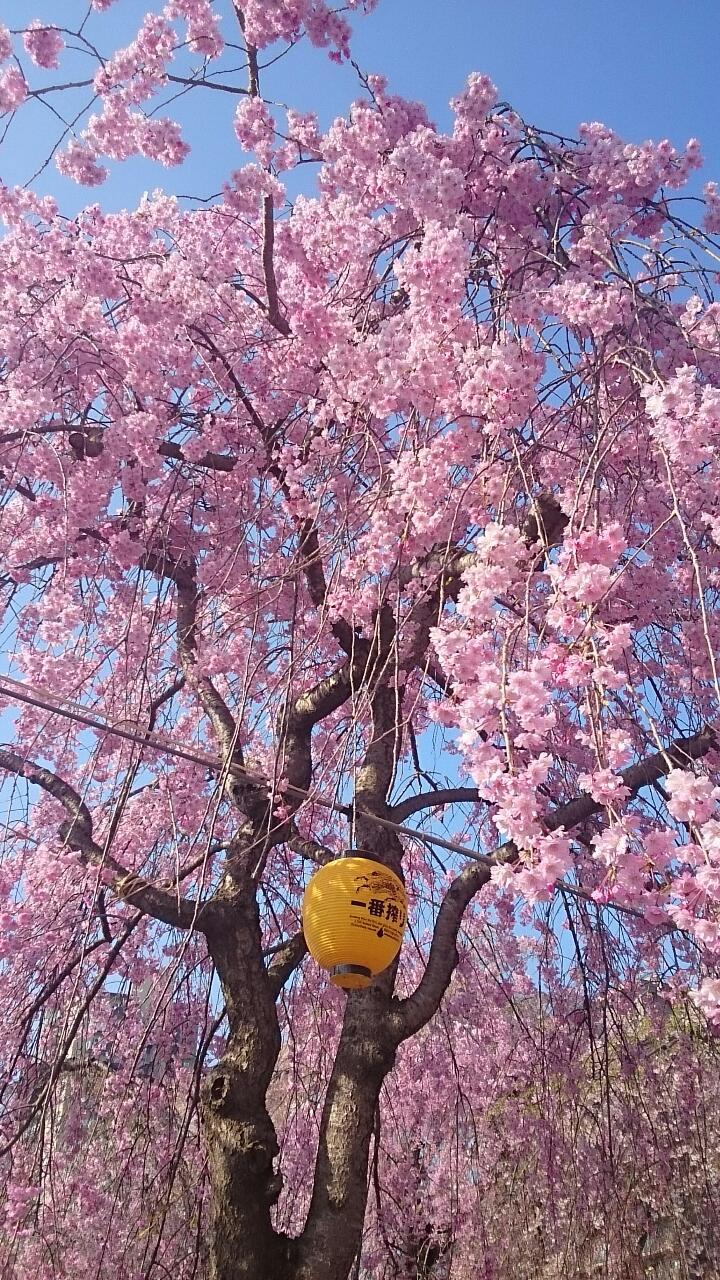 咲くや此花。
