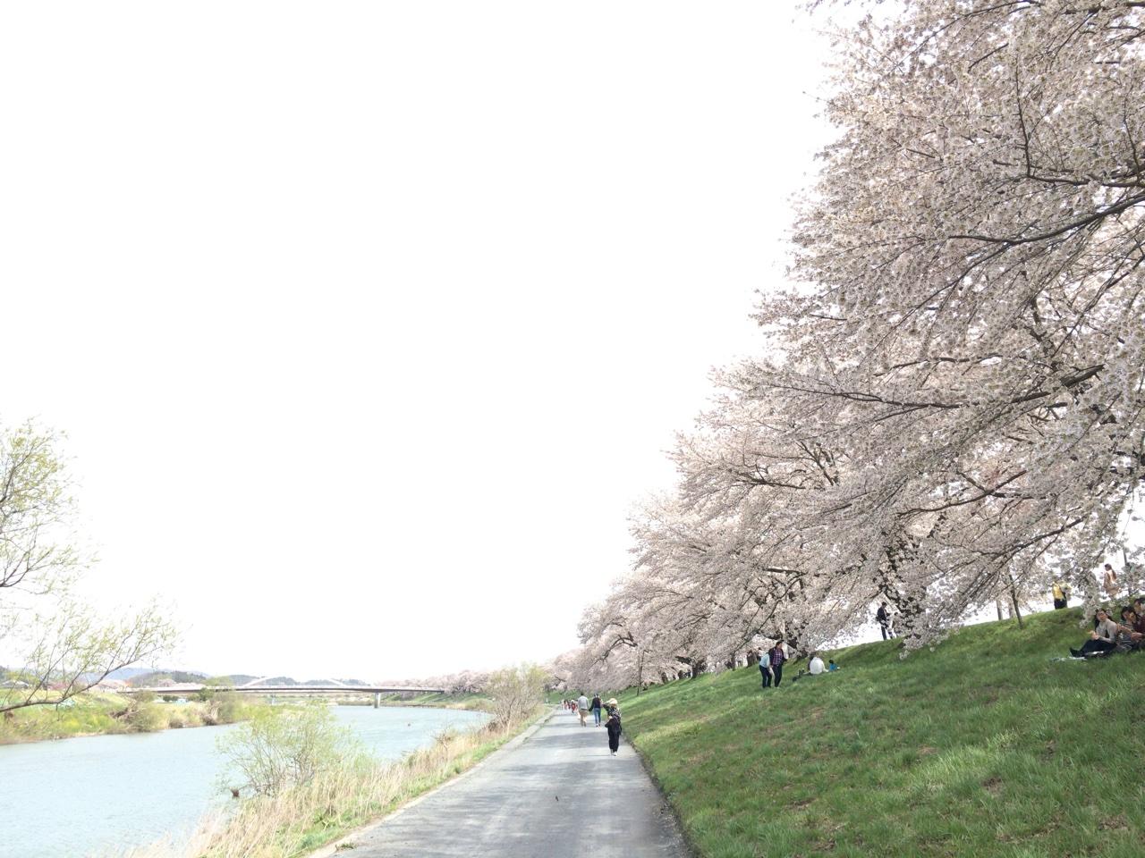 一目千本桜。