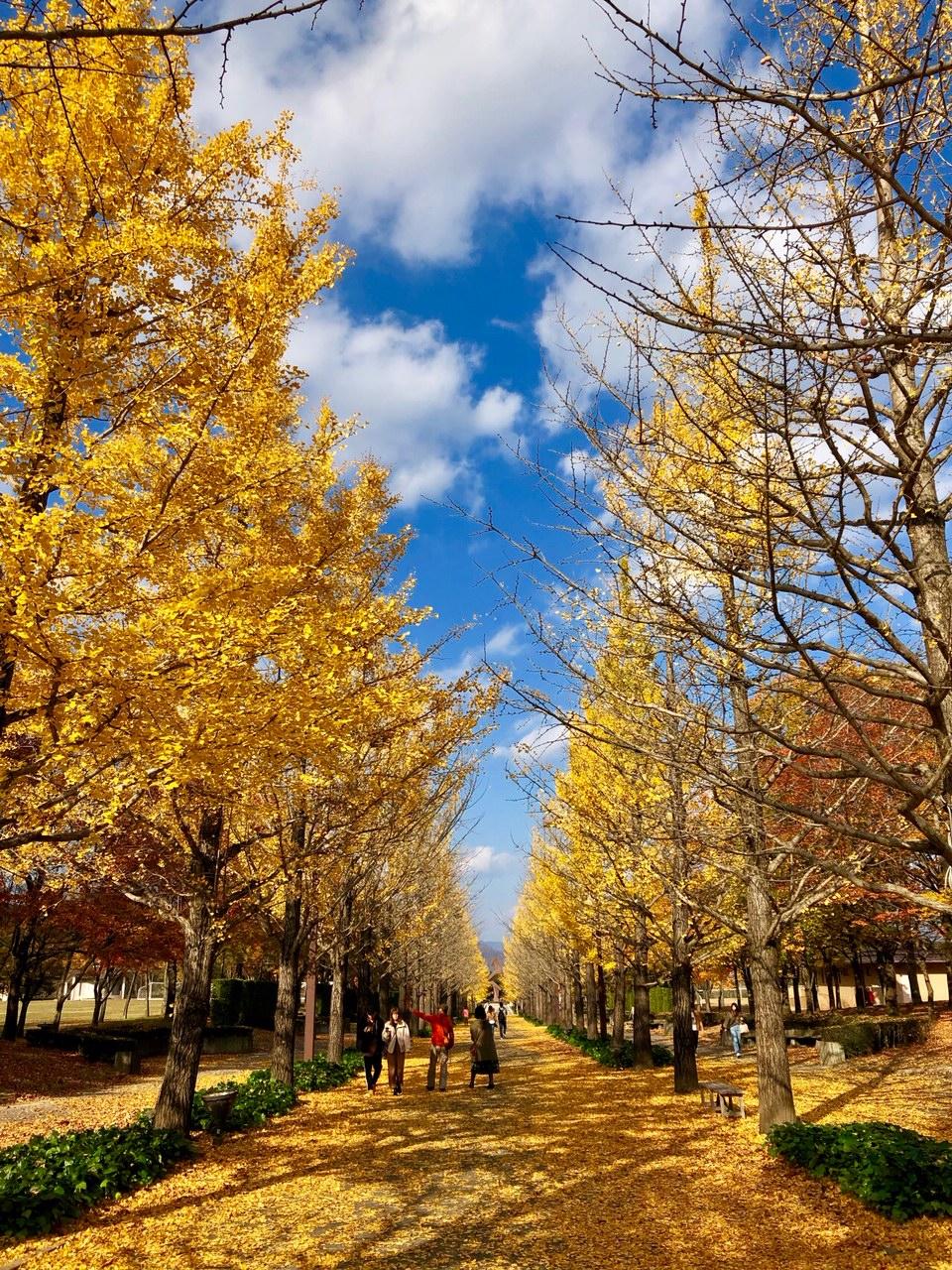 あづま総合運動公園。