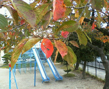 小さい秋。